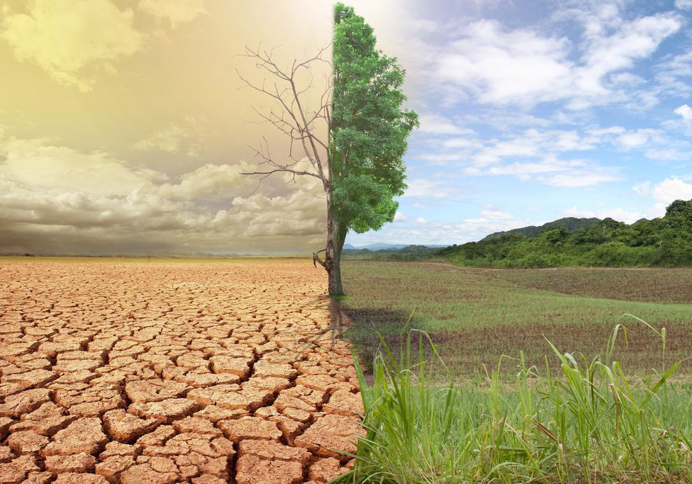 картинки на тему земель уже