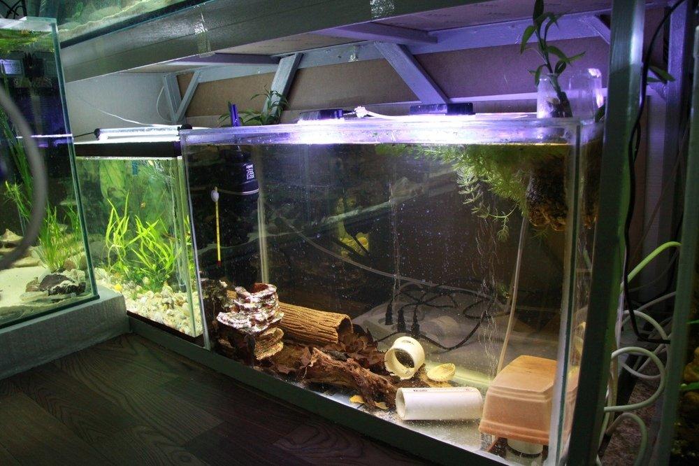 лагере аквариумные хозяйства фото кадры только помогают