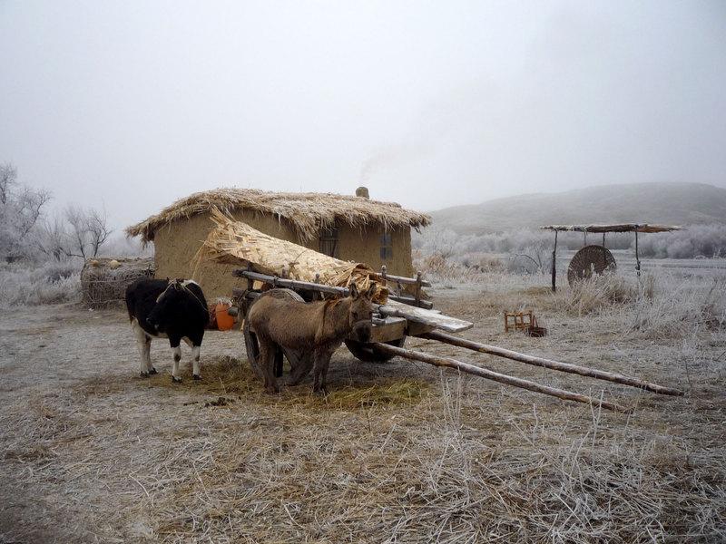 Зима пришла в село