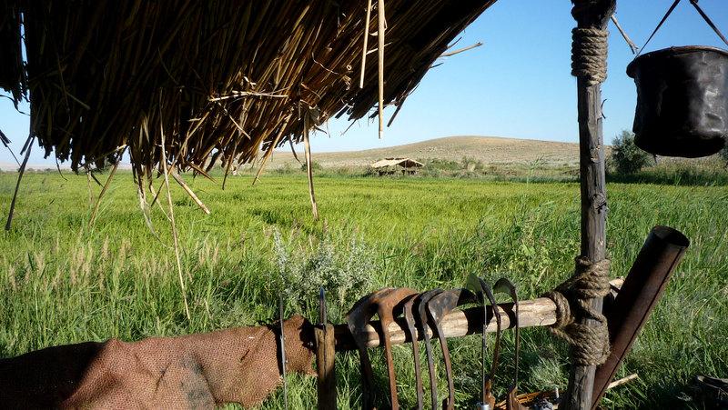 навес в рисовом поле