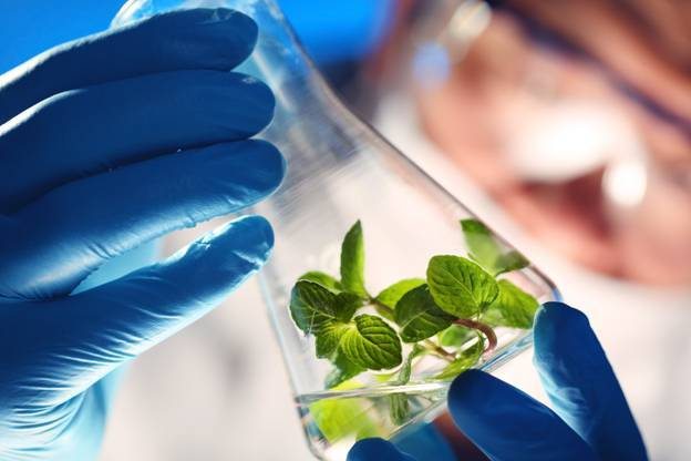 search papers on plant biotechnology