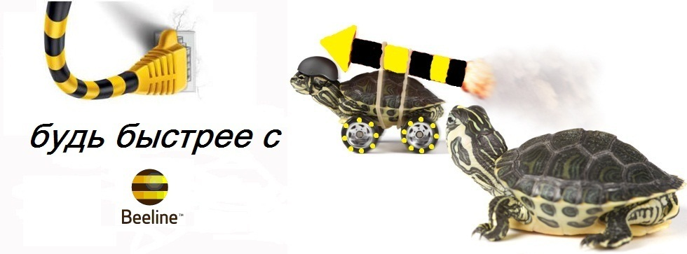 Билайн, черепахи, скоростной интернет,