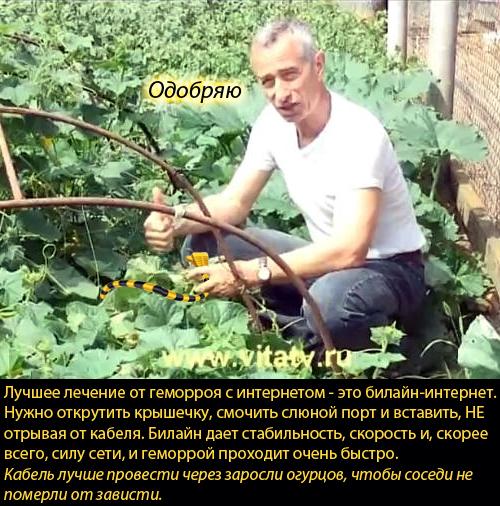 Попов,доктор, огурцы, интернет, Билайн