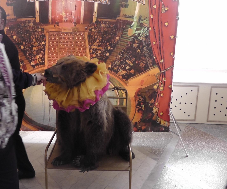 Цирк Юрия Никулина в Алматы