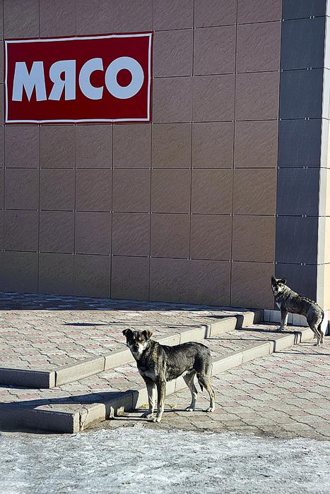 Магазин в Темиртау. Собак кормят на убой)))