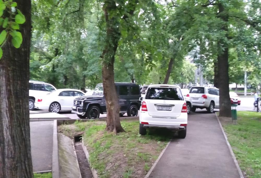 парковка а парке 28 панфиловцев, вырубка деревьев парки алматы, вырубка парк панфиловцев алматы, вырубка деревьев алматы,