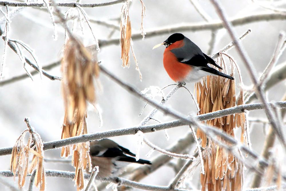 какие птицы прилетают зимой к кормушкам фото панно стену виде